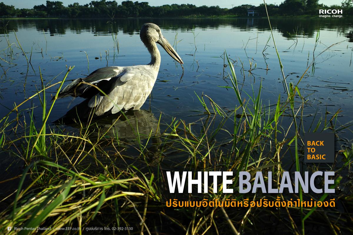 Back to Basic : White Balance